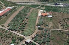 Vista terreno edificabile in vendita a Reggio Calabria in località Rugula