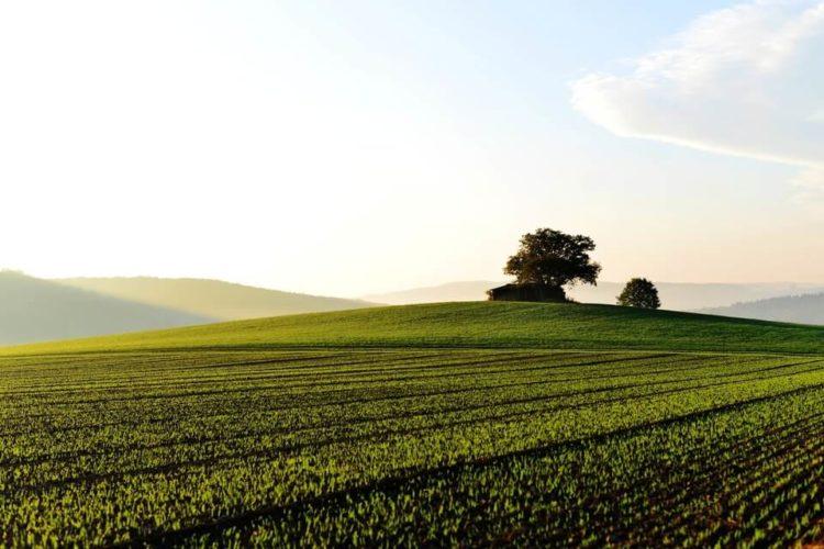 Terra agricola in vendita