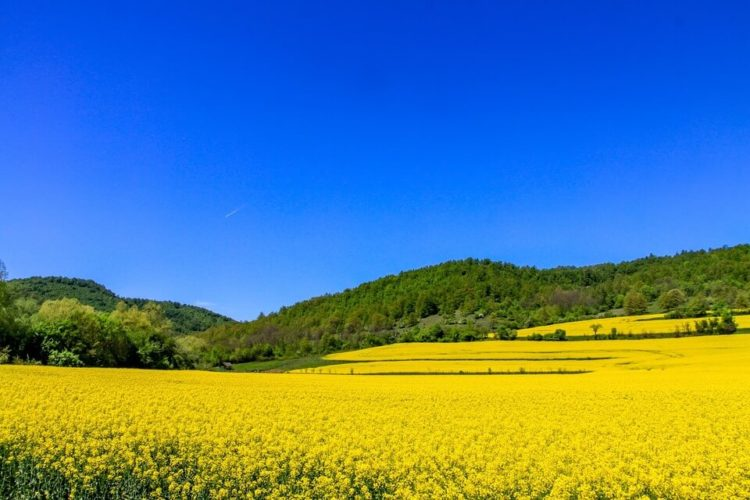Vendesi terreni agricoli