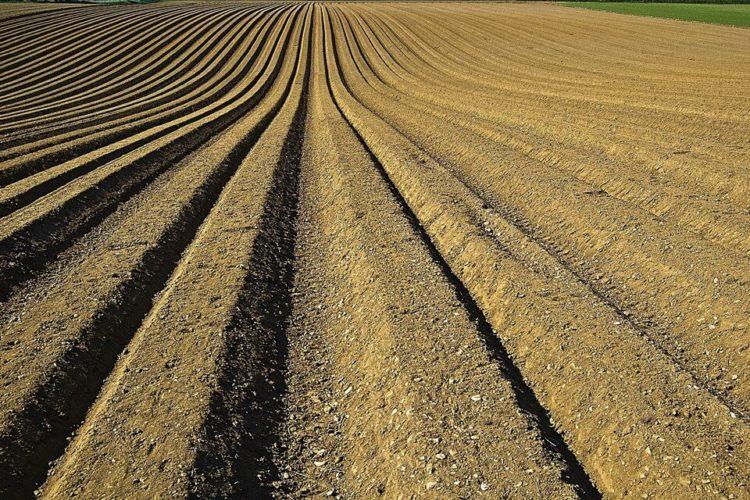 Vendo terreni agricoli