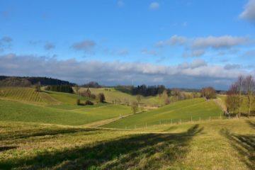 Vendo terreno agricolo